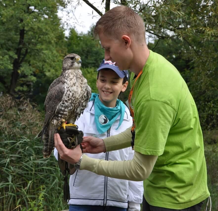 Обучение соколиной охоте в экопарке Сокольник