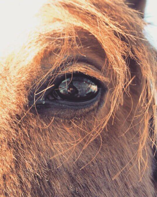 Общение с лошадьми и уроки верховой езды в парке Сокольник
