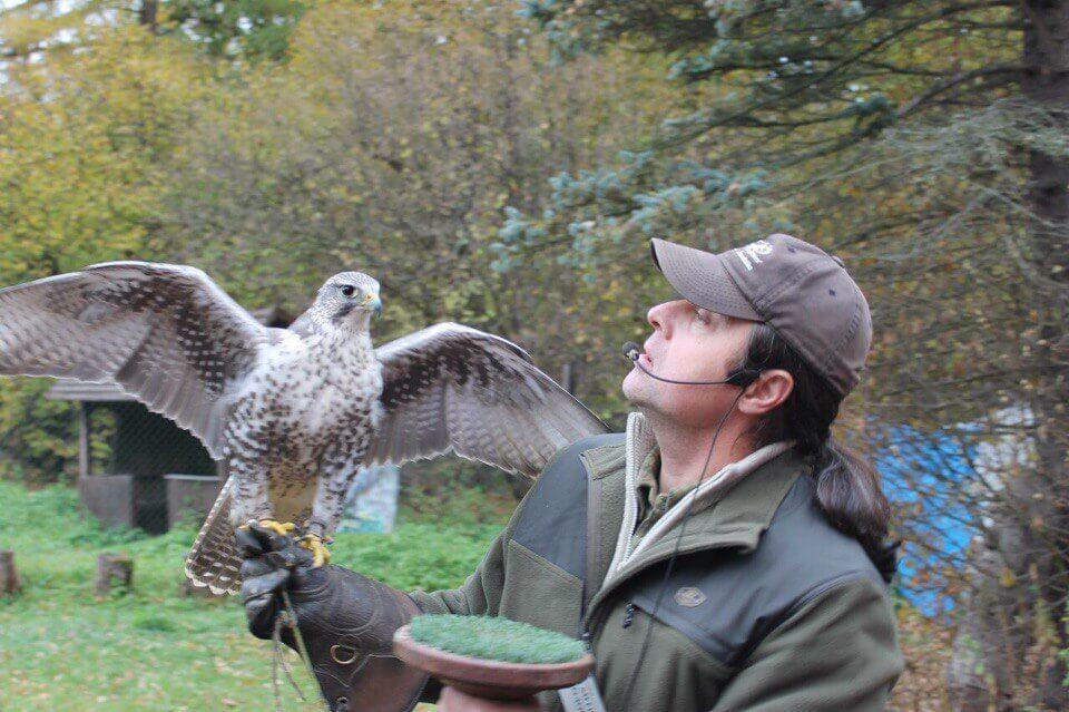 соколиная охота руководство - фото 8