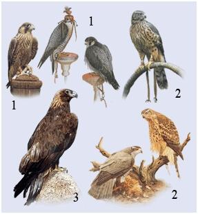 Хищные птицы в экопарке Сокольник