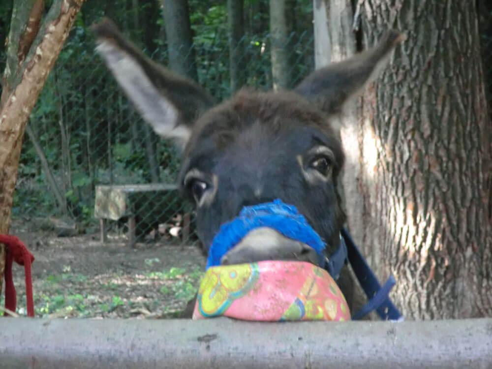 Вот моя детская фотография, где я с мячиком.