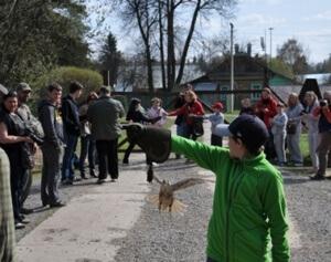 Экскурсии для учеников в музее соколиной охоты в Подмосковье