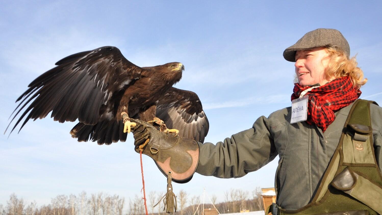 Орел в экопарке Сокольник