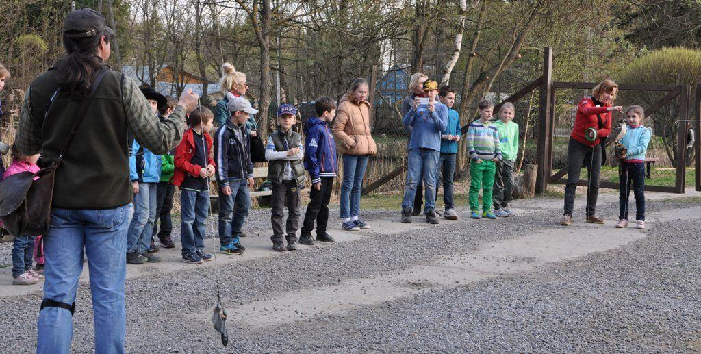 экскурсионно-игровая программа с погружением в мир соколиной охоты в экопарке Сокольник