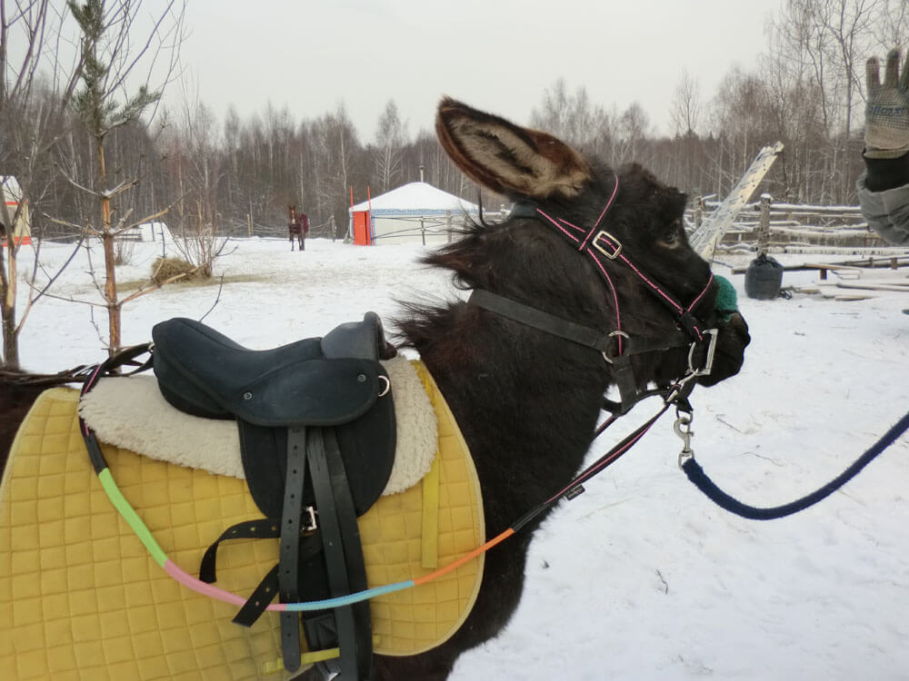 Покататься на лошадях в Музее соколиной охоты